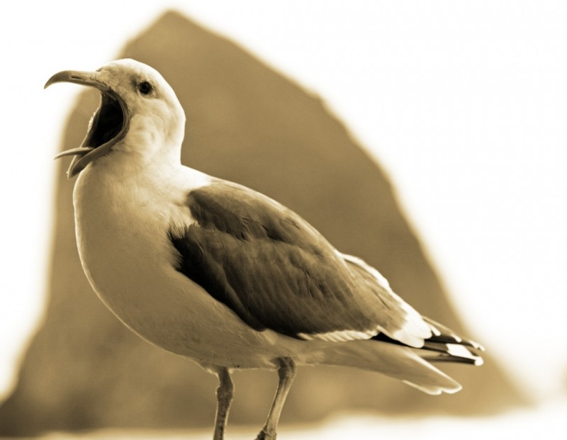 presentation success scotland communications training company rambles seagull.