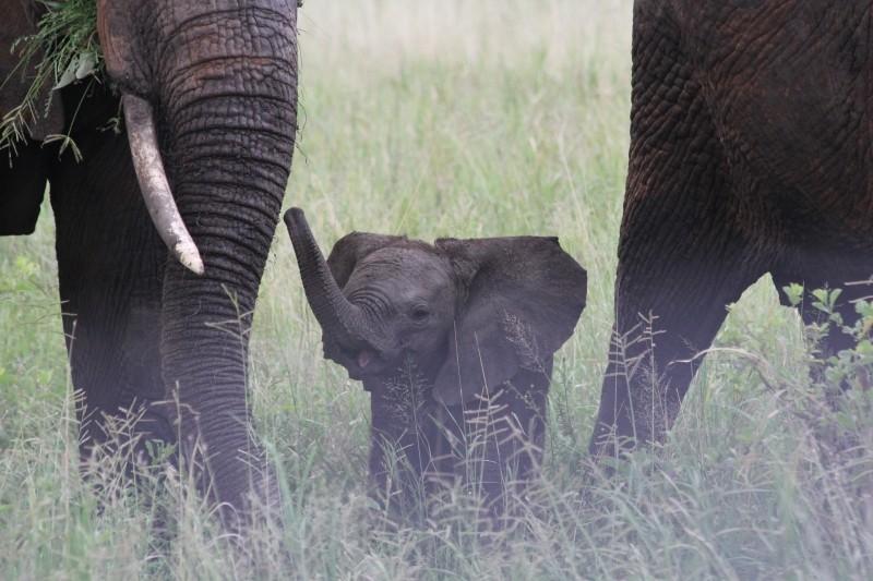 baby elephant media training glasgow.