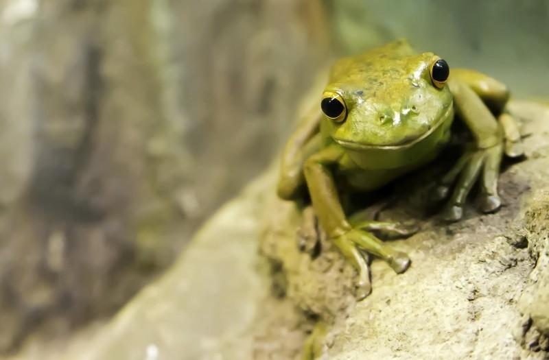 100 blogs - Pink Elephant Comms - media training and presentation skills Glasgow - frog