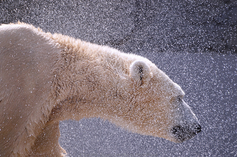 making the complex simple, polar bear, sir david